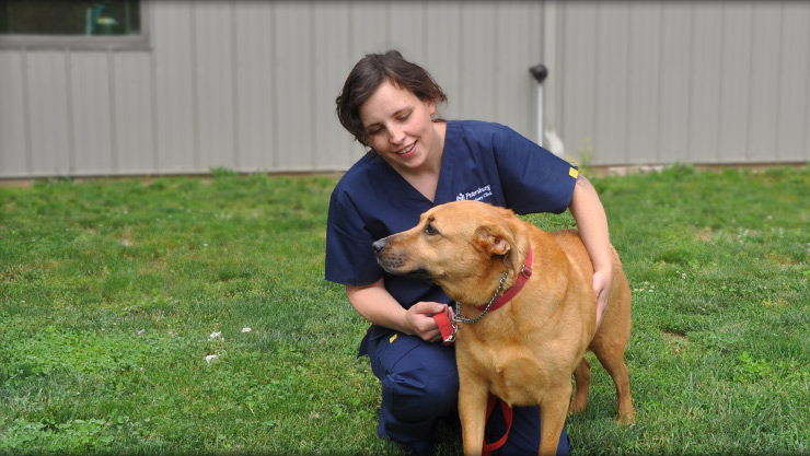 dog boarding and kennels at Cornerstone Animal Hospital