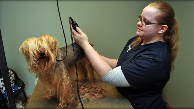 dog grooming at Cornerstone Animal Hospital