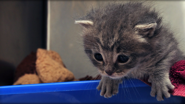 Kitten care at Cornerstone Animal Hospital