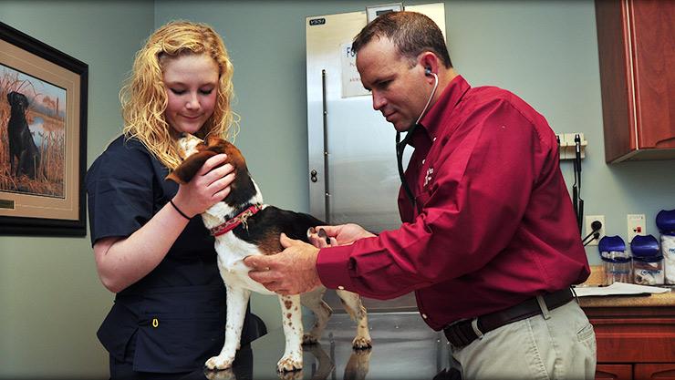 Wellness care at Cornerstone Animal Hospital